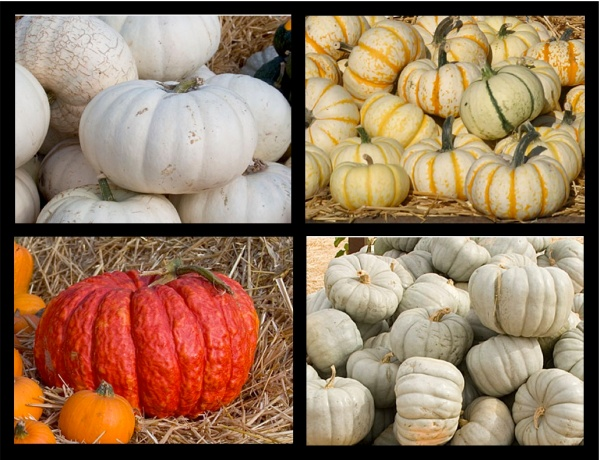 https://lesdeuxmaisons.files.wordpress.com/2010/09/pumpkins.jpg